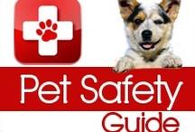 Pet Safety 101 / by Daily Corgi