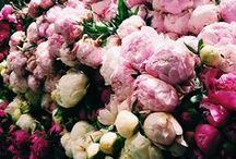 Flowers / by Red Barn Mercantile