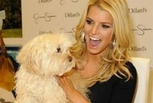 Celebs with their Dogs / by Micky Nowitzke