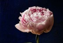 les fleurs / by susan hutchinson / fleurishing