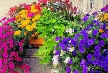 Garden / by Amanda Wilson