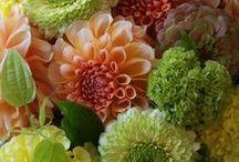 Favorite Flowers / by Amanda Wilson