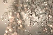 Winter Wonderland / by Angela Chadwick