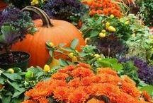 Autumn Awesomeness / by Pamela Crandall