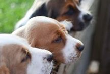 Bassets all Bassets all lovely / by ToSa P Murillo
