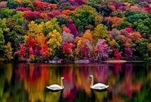 Autumn*Thanksgiving / by Sandra Lederer
