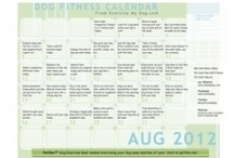 Have a Healthy Dog / by Tracey Patterson