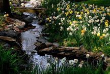 garden/farm / by Mary Jo Bohannon