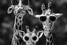 Funny Stuff / by Bryttani Papineau