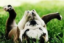 Funny pets / by Cran Berry