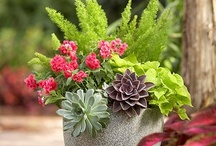 All About Container Gardens / by Deanna Rogers