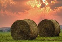 Country Scenes / Country fields, photos, flowers, fences, backgrounds  / by Jamie Barnes