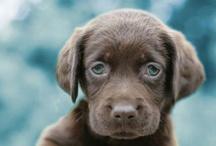 Must love dogs. / by Jordy Liz