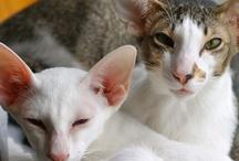 Cats / by Bridget Colson