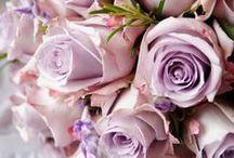 Lovely Lavender / by Jennelise