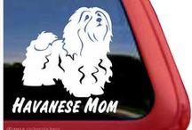 Havanese!!! / by Rene Marker