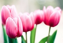Fleurs / by Noémi Privé