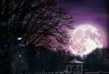 Moonstruck / by Deborah