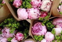 Arrangements/Flowers / by Rachel Larsen