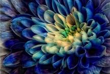 Flowers / by Suzy S