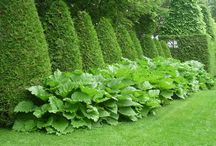 Garden Design & green spaces... / Grand open spaces influenced by English and French gardens. / by Debra Drake