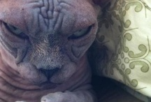Cat Crap / Grumpy Cat / by Trish Dixon Carpico