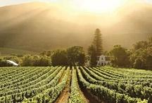 Wineries I've Visited / by Kelsey Ivey