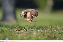 Chi O Owls / by Sherry Meeks