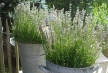 All Things Lavender / by The Ironstone Nest