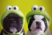 Animals Are Cool!! / by Sandy (Girlyfrog) Eyler