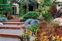 Favorite Places & Spaces: Yard / Yard / garden / landscaping ideas / by Julie Childers