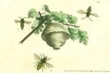 Bee my Honey / by Gina Ward