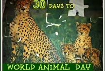 World Animal Day / by BlogMeMom