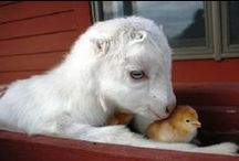 Interspecies Mingeling / by Holy Cuteness