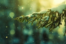 Have Yourself A Merry Little Christmas / by Amanda Ermanis