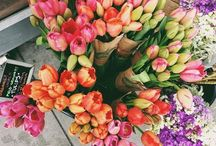 Flowers, flowers and more flowers! / by Myra Piloni