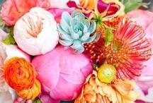 Blooms / by Heather Sanders