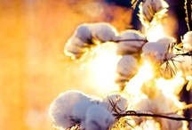 Seasons:Christmas/Winter / by Kate Ackerman