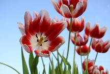 Flower Power / by KHOU 11 News
