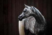 Horses / by Chantal Brûlé