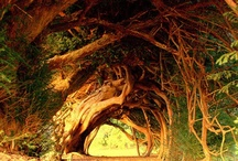 Dreamlike Locations & Spaces / Locations that look to spectacular to be real  / by Carmen P