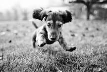 Doggies... and other funny pets / by Marin Kristine