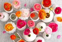 f l o w e r s ♥ / a collection of beautiful floral that make me smile. / by Alycia Crowley