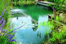 Outdoor oasis / by Mary S (: