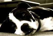 doggies :) / by Amanda Berry