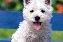 I Love Dogs! / by Lisa Shelton