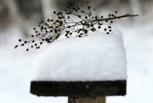 winter warmth / by Angela Reynolds Whitlock