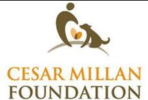 Cesar Millan Foundation / To create and deliver community humane education programs and promote animal welfare by supporting the rescue, rehabilitation, and rehoming of abused and abandoned dogs. Learn more: http://www.millanfoundation.org/ / by Cesar Millan