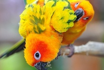 Birdies / by Jennifer Lowery