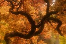 Trees / by Abbie Dugan